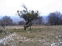 fotó az Eperjes Tanösvényről